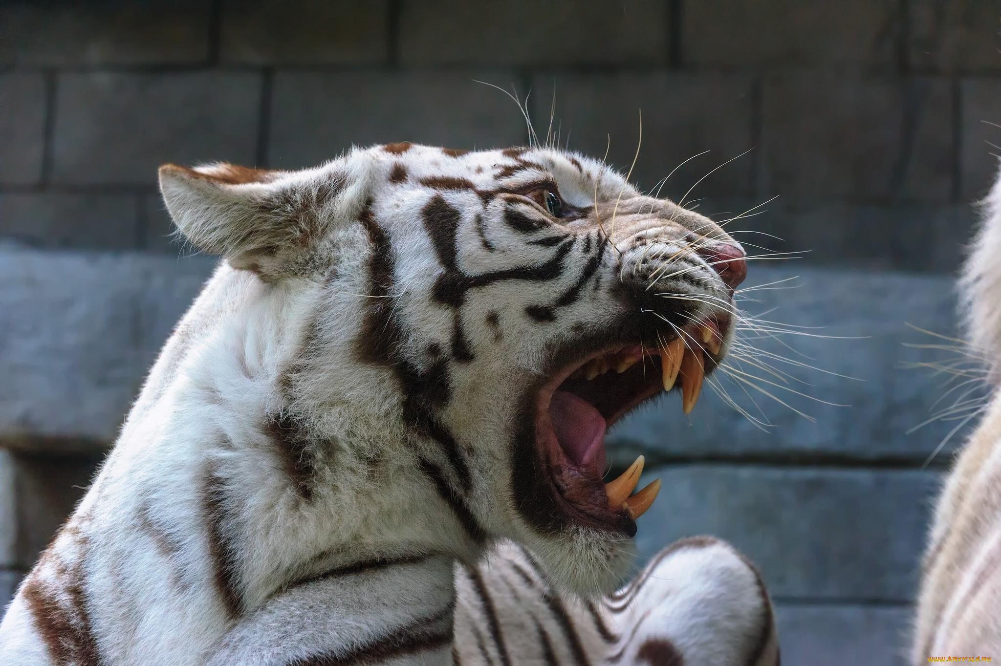 картинки рычащих животных уникальный дар